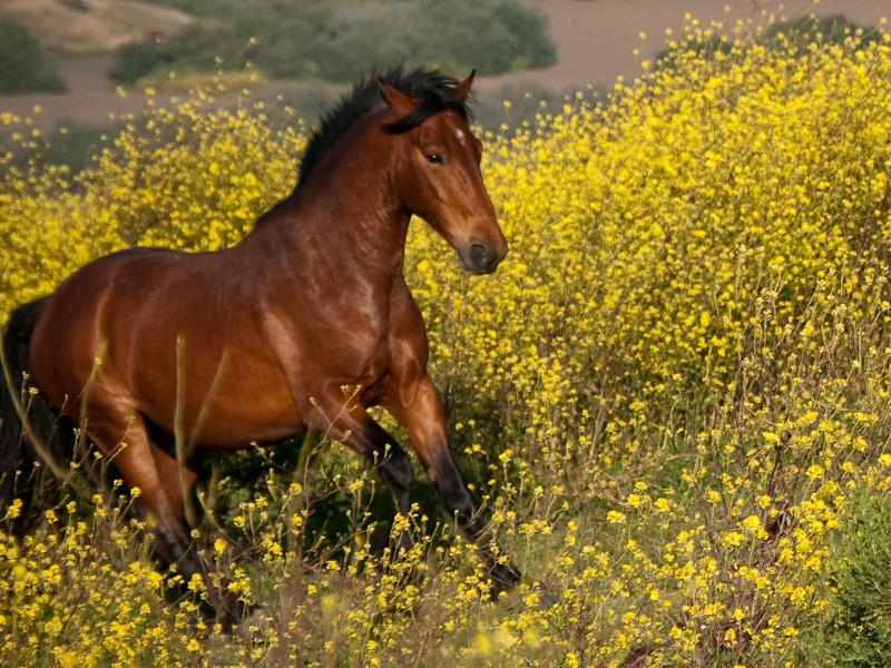 Wild Horses at Return To Freedom Wild Horse Sanctuary in ...