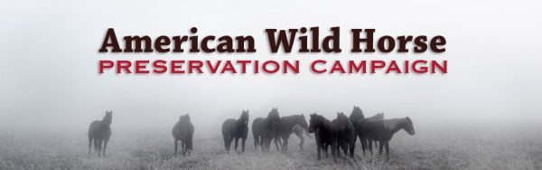 Save the Wildhorses of North America and Worldwide › Wild